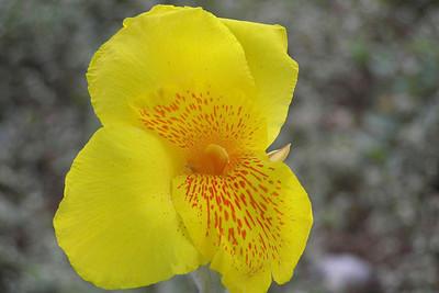 2005-02-27 Flowers-Gerri