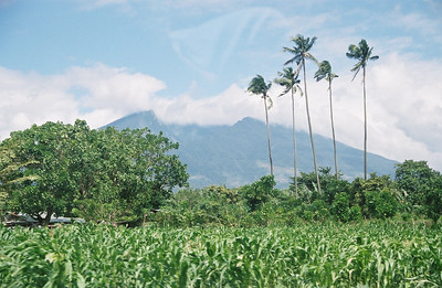 Coconut trees during the 6 hour drive to Calauag, my mom's hometown.