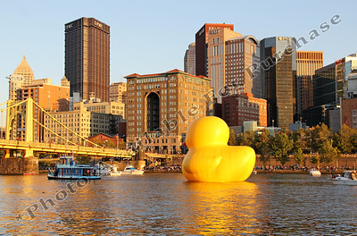 PittsburghDuck04r