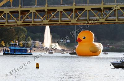 PittsburghDuck02