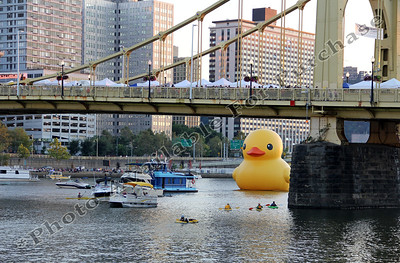 PittsburghDuck09r