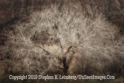 Magic Tree B&W Paint  _H1R6562