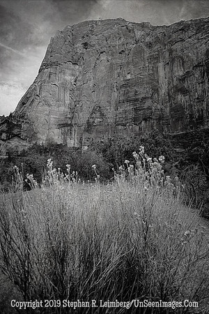 Flower Mountain _H1R6478
