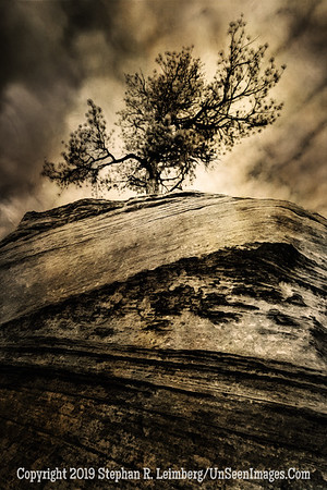 Tree on Rock _H1R5997