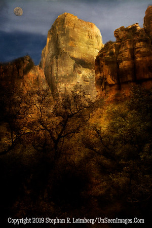 Rock and Tree _H1R6491