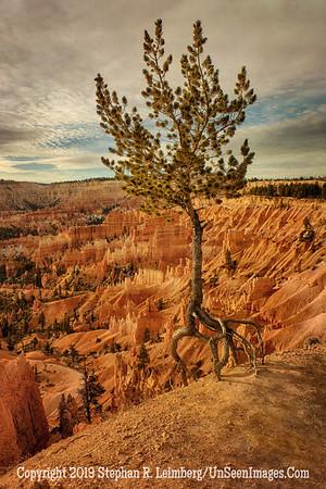 Tree in the Sky _H1R5634