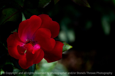 015-flower-altoona-01oct13-4714