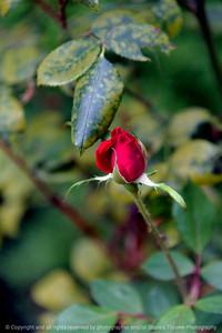 015-rose-ankeny-27aug17-08x12-017-0961