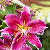 015-flower-ankeny-16jul17-12x18-004-0293