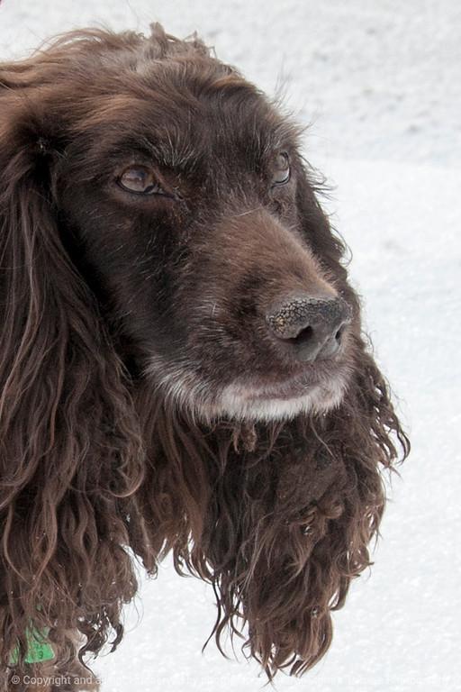015-dog_storm-ankeny-01mar15-009-04x06-2010