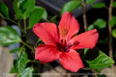 015-flower-ankeny-08aug18-12x08-007-350-6596