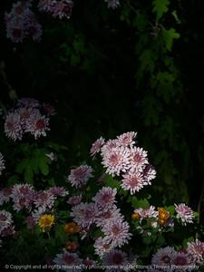 flower-ankeny-07oct15-09x12-001-5475