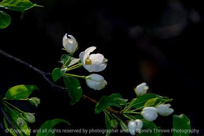 015-flower-ankeny-05may18-12x08-500-4293