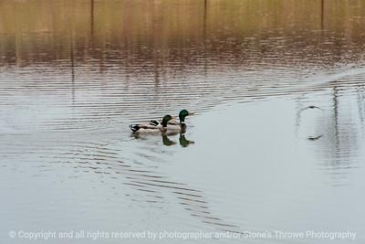 015-ducks-ankeny-02may18-09x06-007-4183