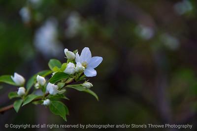 015-flower-ankeny-05may18-12x08-350-4284