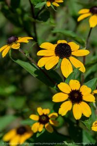 015-flower-ankeny-08aug18-08x12-007-350-6652