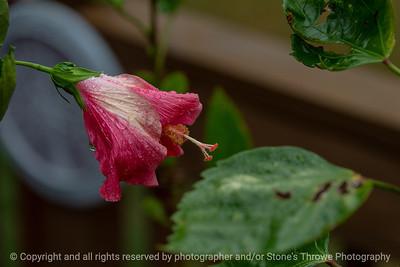 015-flower-ankeny-07aug18-12x08-007-350-6539