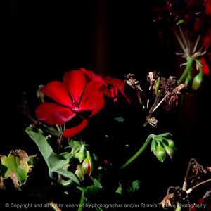 015-flower-ankeny-09x09-006-400-7625