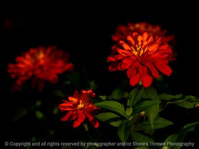 015-flower-ankeny-24jun16-12x09-022-2604