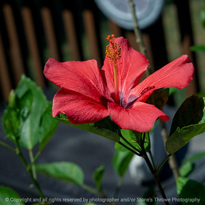 015-flower-ankeny-08aug18-09x09-006-350-6611