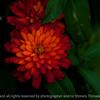 015-flower-ankeny-24jun16-18x12-003-2540