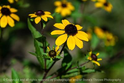 015-flower-ankeny-08aug18-12x08-007-350-6681