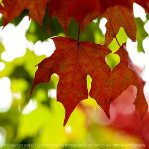 leaves-ankeny-10oct15-09x09-206-5572