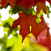leaves-ankeny-10oct15-09x09-206-5572