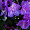 flowers-ankeny-12apr15-12x09-002-2433