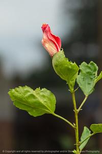 015-flower-ankeny-05aug18-08x12-007-350-6514