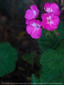 015-flower-ankeny-01oct17-09x12-007-350-2131