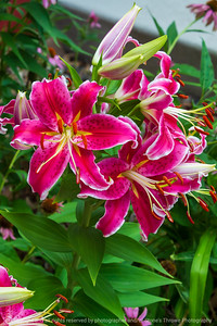 015-flower_lily-ankeny-13jul21-08x12-008-400-3753
