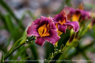 flower-ankeny-15aug15-18x12-003-4239