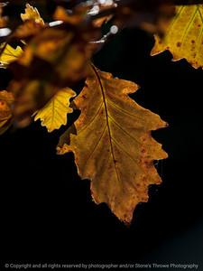 leaf-ankeny-11oct15-09x12-001-5586