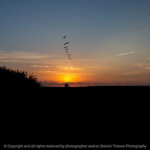 015-sunset_geese-ankeny-05sep20-09x09-006-400-8026