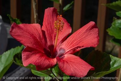 015-flower-ankeny-08aug18-12x08-007-350-6626