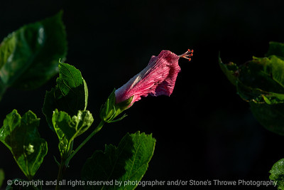 015-flower-ankeny-08aug18-12x08-007-350-6576