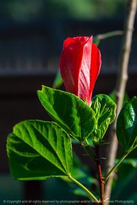 015-flower-ankeny-08aug18-08x12-007-350-6557