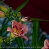 015-flower-ankeny-24jun16-18x12-003-2555