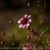 015-flower-ankeny-24jun16-18x12-003-2580