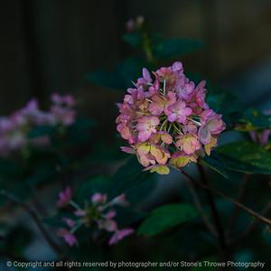015-flower-ankeny-08oct19-09x09-006-400-3812