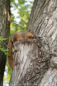 015-squirrel-ankeny-13may17-12x18-003-9111