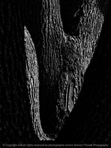 015-tree-ankeny-02apr16-09x12-201-bw-7229