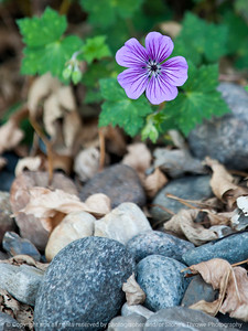 flower-ankeny-07oct15-09x12-001-5471