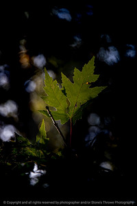 015-leaf-ankeny-07oct19-08x12-008-400-3725