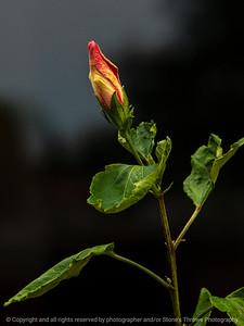 015-flower-ankeny-05aug18-09x12-001-350-6503