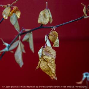 015-leaf_winter-ankeny-09x09-006-400-9329