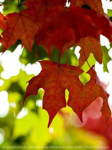 leaves-ankeny-10oct15-09x12-201-5572