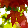 leaves-ankeny-10oct15-09x12-201-5572