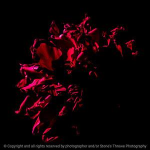 015-abstract-ankeny-31may21-09x09-206-400-2330